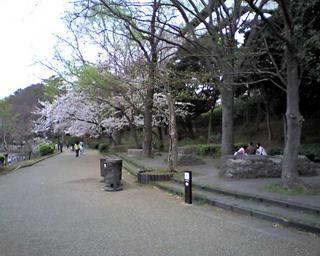hanami20060402_3.jpg
